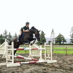 Horse for sale: Quantum mare