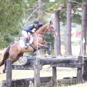 Horse for sale: Beautiful Bold Eventer