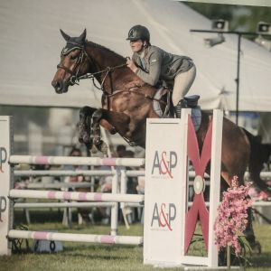 Horse for sale: 12 Year Old Thoroughbred Gelding