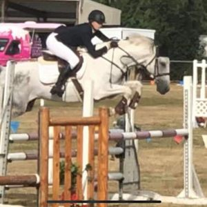 Horse for sale: COMPETITIVE ALL-ROUNDER
