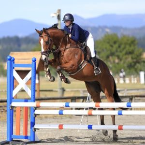Horse for sale: Talented 5yr Gelding