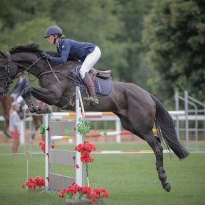 Horse for sale: Ultimate YR/JR/Amateur All Rounder