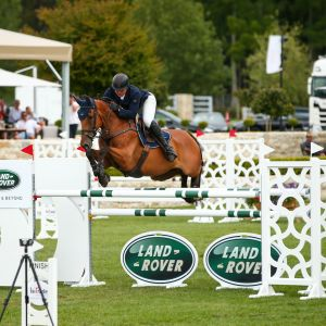 Horse for sale: ULTIMATE FIRST YR/GP HORSE