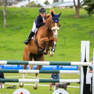 ULTIMATE EASY YOUNG RIDER/GRAND PRIX HORSE