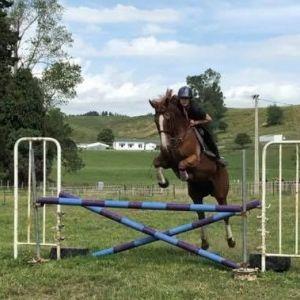 Horse for sale: Beautiful & Going Chestnut Gelding! SHOWJUMPER/DRESSAGE
