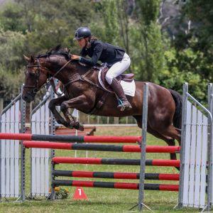 Horse for sale: Confident, fun Irish Show Jumper