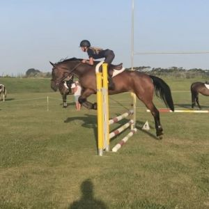 Horse for sale: Athletic 5yo Lindberg Mare