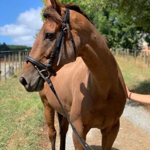 Horse for sale: Gorgeous Gelding with Wicked Jump