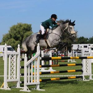 Horse for sale: EYE-CATCHING SHOWJUMPER OR EVENTER