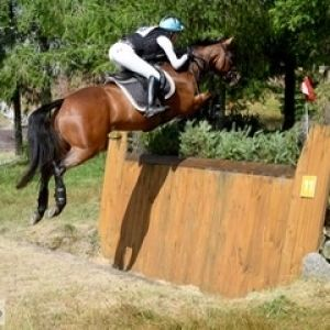 Horse for sale: Competitive 2** Eventer