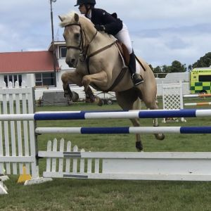Horse for sale: MELLOW YELLOW