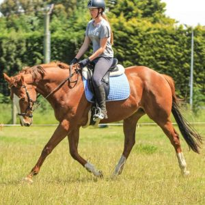 Horse for sale: Perfect First Horse