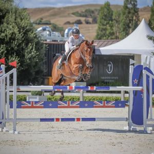 DODGE NZPH Quality Showjumper
