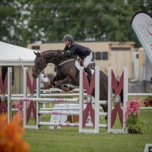 Horse for sale: Lovely 4yr Gelding