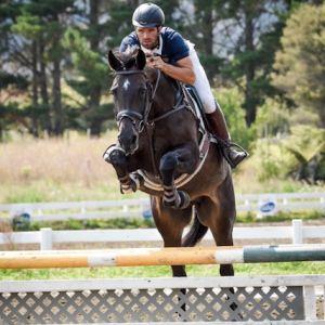 Horse for sale: PHS CENTANA
