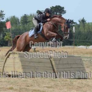 Horse for sale: Stunning and Talented