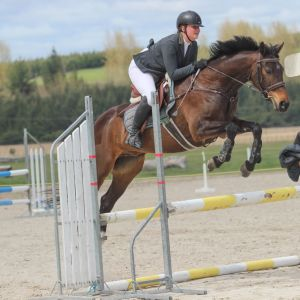 Horse for sale: Stunning All-Rounder