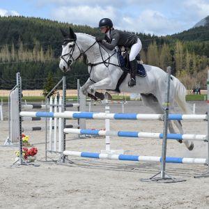 Horse for sale: Ultimate JR/AR/Pro-am Mount