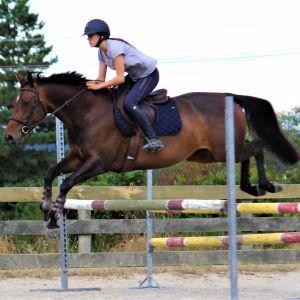 Horse for sale: Esperanza Diamond WS