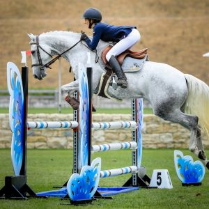 Horse for sale: TOP MULTI-DISCIPLINED SHOW JUMPER