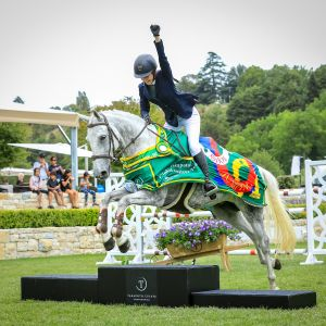 Horse for sale: competitive junior rider mount