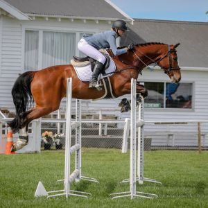 Horse for sale: Mountain Eutopia