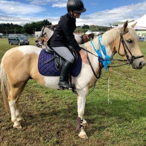Horse for sale: Super Allrounder