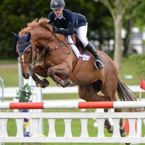 Horse for sale: Winning Amateur Mare