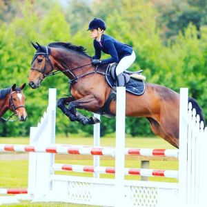 Horse for sale: **Quality 5yo**