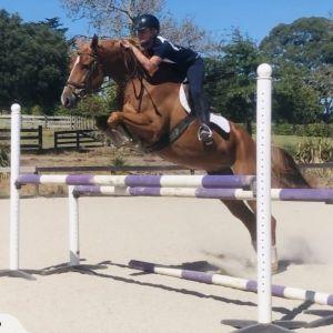 Horse for sale: Super Talented Eventer/Show Jumper
