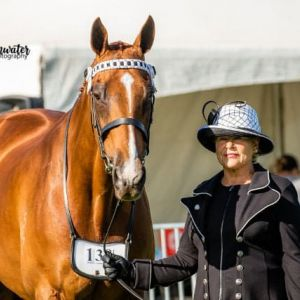STUNNING SHOW AND DRESSAGE SCHOOLMASTER