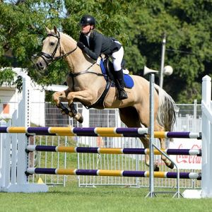 Horse for sale: Showjumping Superstar