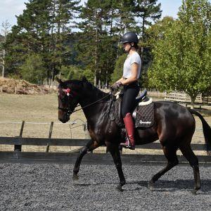 Horse for sale: AUS Import Show/Dressage mount