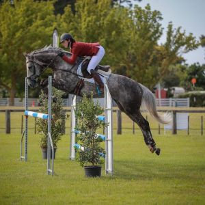 Horse for sale: Lovely Talented All Rounder