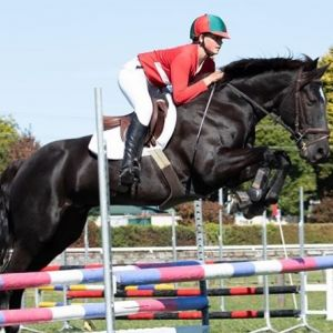 Horse for sale: Talented All Round Superstar