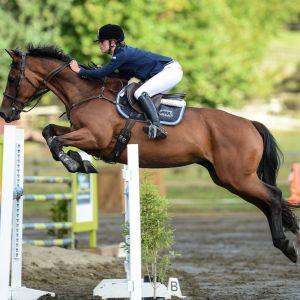 Horse for sale: FUN ALL ROUND MARE