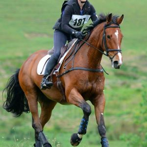 Horse for sale: All rounder