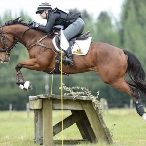 Horse for sale: Eye Catching All Rounder