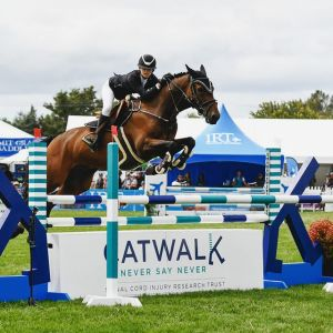 Horse for sale: Extremely fun and capable Junior/ Amateur/ Young Rider Mount!