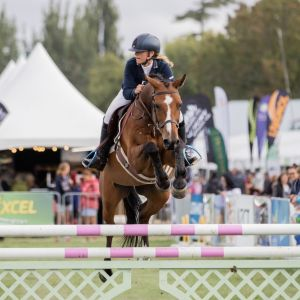 Horse for sale: TALENTED, FUN, SAFE, ALLROUNDER