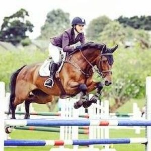 Horse for sale: 16.2 Showjumping gelding