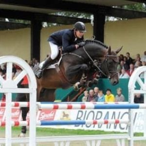 Horse for sale: One for the Future - 3YO QUINTENDER