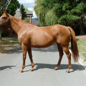 Horse for sale: Broodmare - A Perte de Vue