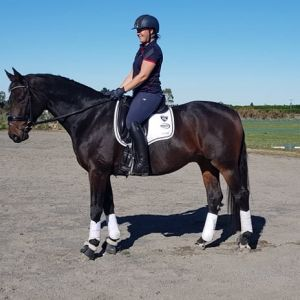 Imported Level 3 dressage horse with FEI Potential
