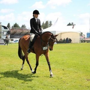 Horse for sale: Outstanding Allrounder
