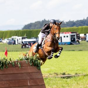 Horse for sale: ALLROUNDER HACK