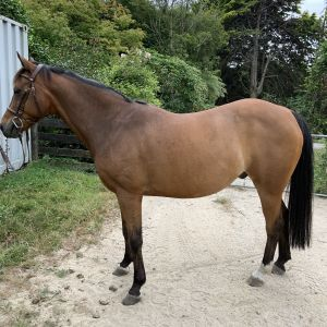 Horse for sale: Feodore