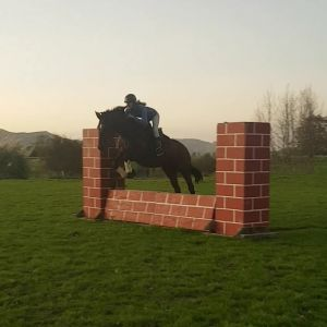 Horse for sale: Ultimate fun alrounder