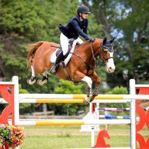 Horse for sale: Top young rider/grand prix showjumper