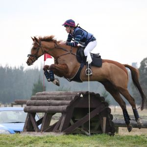 Horse for sale: Competitive Eventor